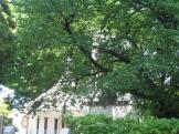 chikaramachi_church-130508-0017_web
